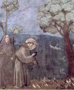 francisbirds